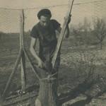 Taille d'un piquet de clôture