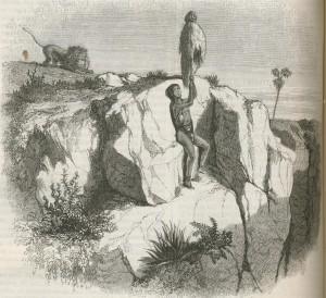 Hottentot sauvé du lion par son bâton