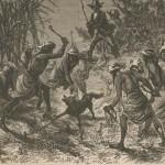 chasse au chacal des Zingares