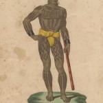 Carolinois et son bâton par Freycinet