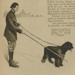 baguette à chien d'aveugle