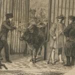 Le comptage du bétail à Paris en 1853