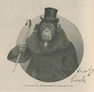Le chimpanzé Master Link en 1909