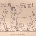 Bâton de bouvier lors du labourage dans l'ancienne Egypte