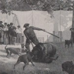 Bâton de combats d'animaux dans les Landes